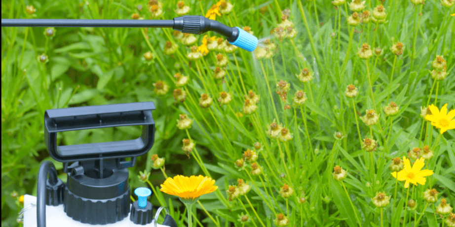 Weed Killers for Flower Beds in 2021