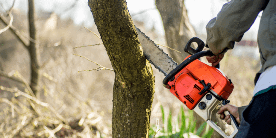 Cut a Tree with a Chainsaw